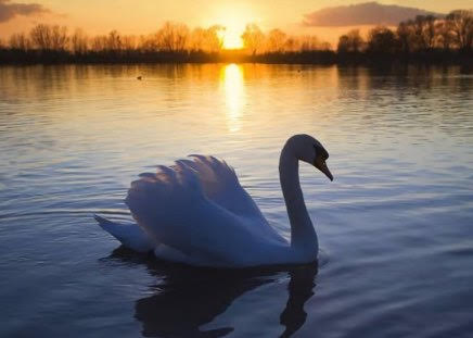 The Rising of the Swan